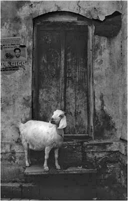 http://www.anitaandrzejewska.pl/galerie/India_2001/index.html