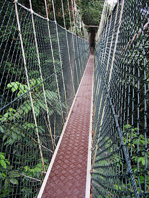malaysian rain forest cannopy