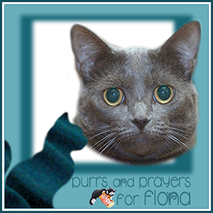 Purrs and Prayers please for Fiona