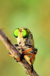 lalat hinggap di jendela