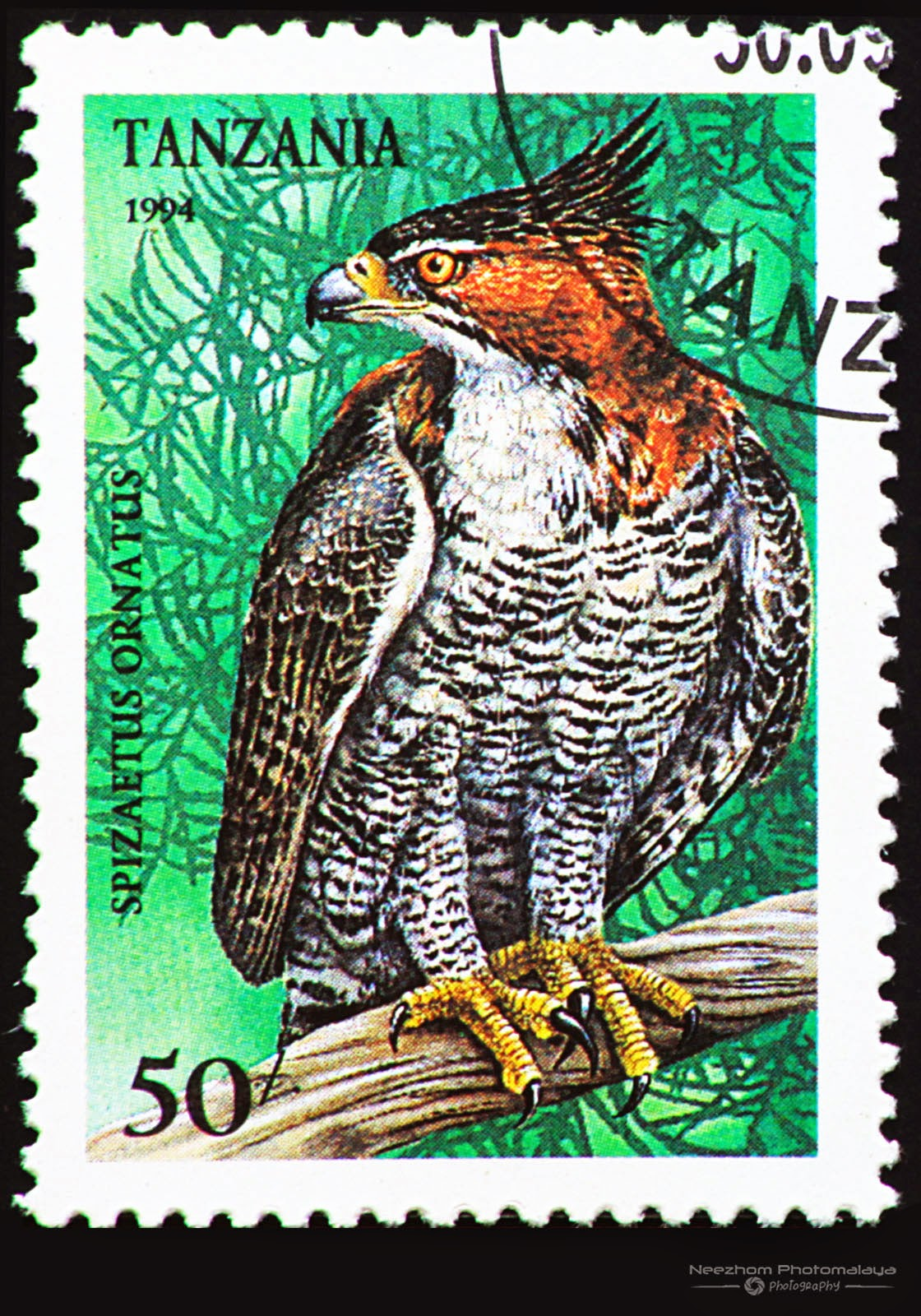 Tanzania 1994 Birds of Prey stamp - Ornate Hawk-Eagle (Spizaetus ornatus) 50 s