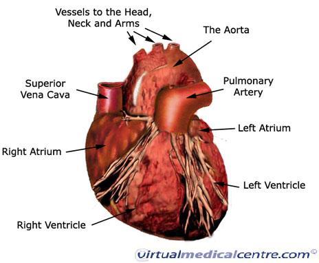 Science Circulatory System
