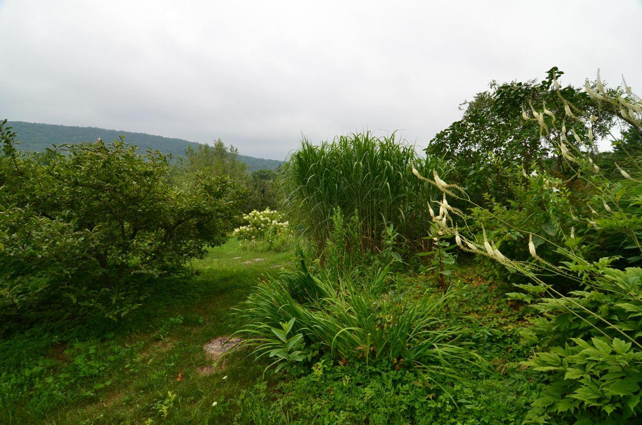 Flower hill farm silent verdurous studies fluid hummers for Flower hill farms