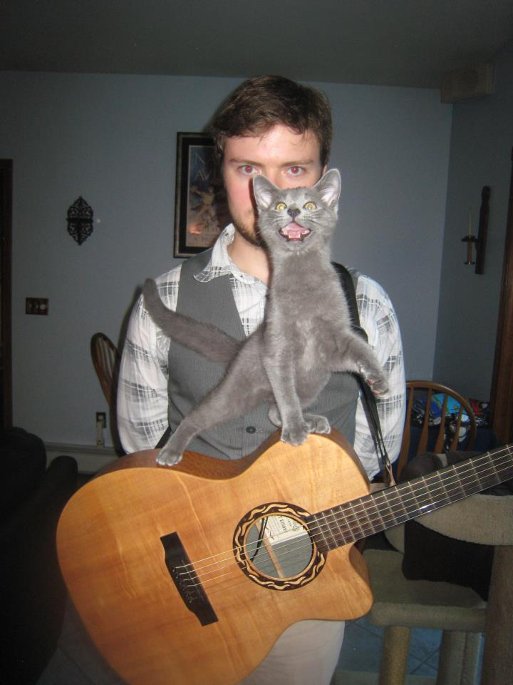funny cat pictures, musician cat