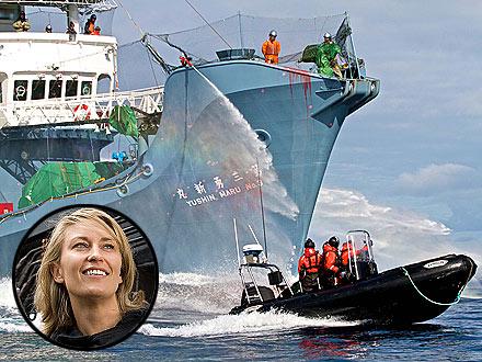 Whales War.