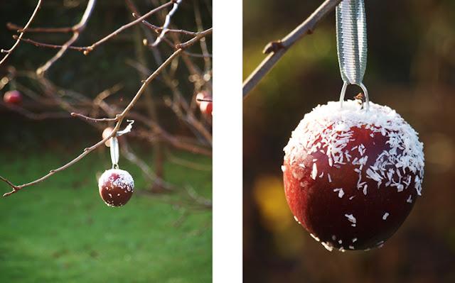 Æbler med kokosdrys til julefryd og fuglemad