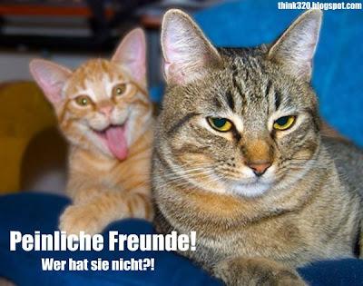zwei katzen auf einem foto. eine streckt die zunge heraus: peinliche Freunde. Jeder hat einen!
