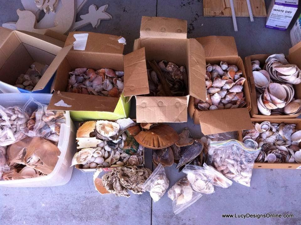 boxes of seashells