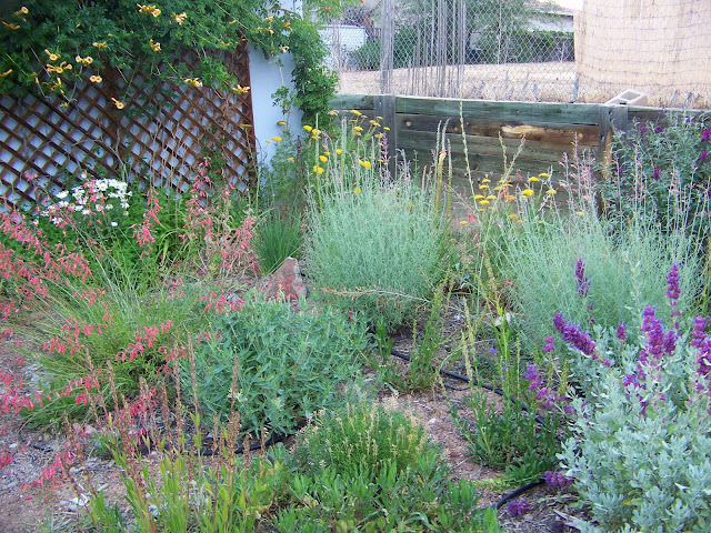 how to clear overgrown flower bed