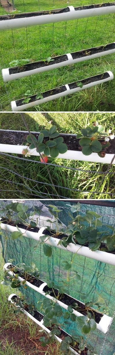 Идеи для дворика и дачи своими руками - Страница 2 PVC+Strawberry+hanging+garden