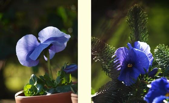 En nem og billig måde at få blomster i haven i marts