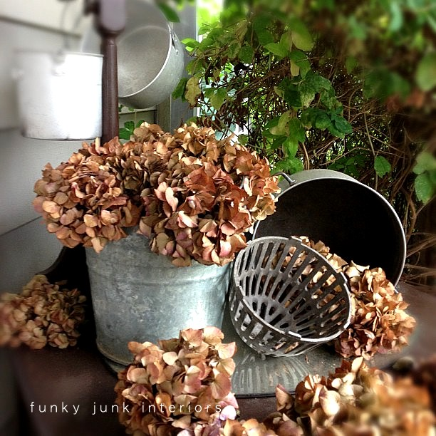 Dried hydrangeas that turned from vibrant to brown after frost hit. via Funky Junk Inteirors