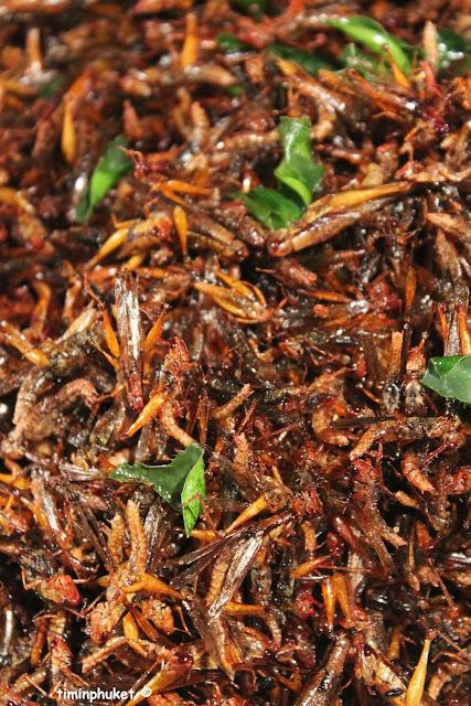 grasshoppers.7.JPG