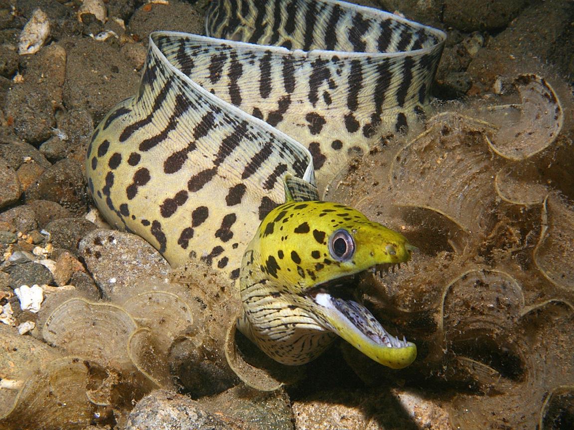 Sea creatures. Dangerous sea animals - photo 25