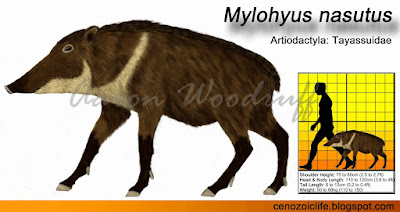 Mylohyus