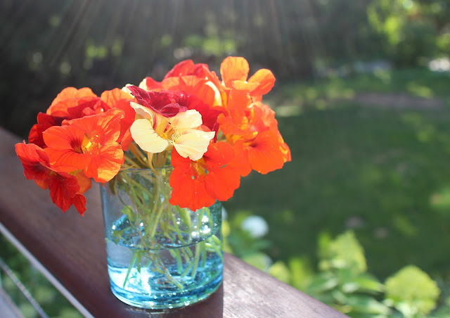 The Garden Appreciation Society -- The Impatient Gardener -- nasturtiums