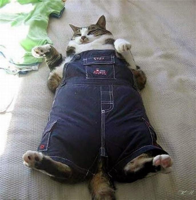 Что сделать из старых джинсов своими руками