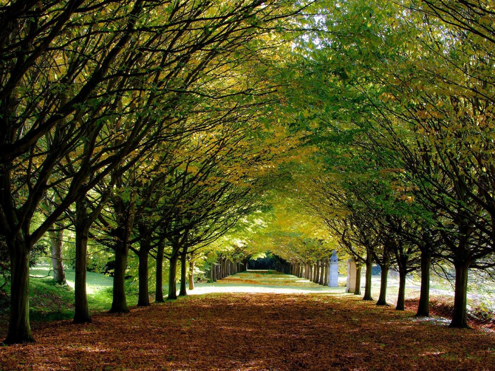 Autumn anglesey abbey cambridgeshire england landscape