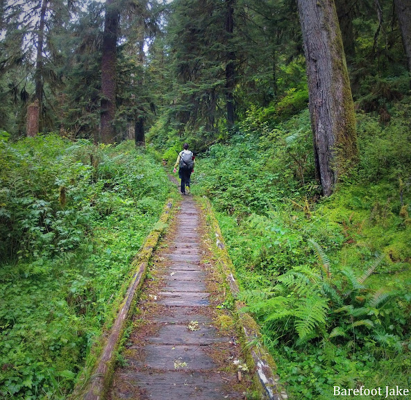 north fork quinault trail