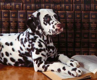 Cutest Dog Breeds In The World Dalmatians