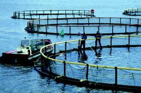 Biodiversit et activit s humaines poissons sauvages ou d for Alimentation poisson elevage