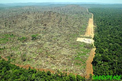 http://4.bp.blogspot.com/-mkQmSbu62D0/TdU8-8WyUSI/AAAAAAAAApg/hXFsDZwYOm0/s1600/deforestation.jpg