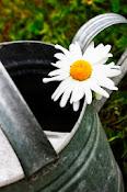 Zonindelning trädgårdsbloggare
