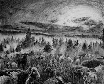 Gathering the Sheep