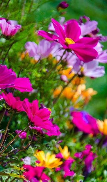 plantas bordaduras jardimUm jardim para cuidar Para um verão mais