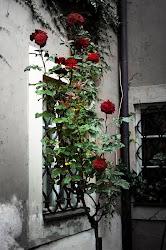 Perfume de rosas na janela...