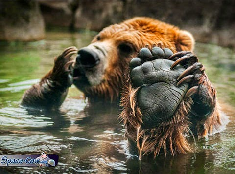 funny cute bear picture