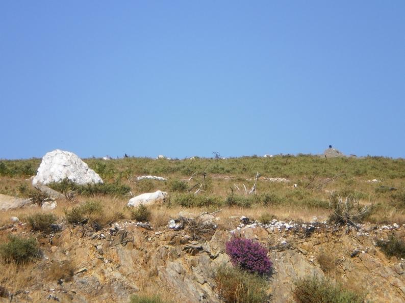 Aves pousadas nas pedras da Serra da Freita