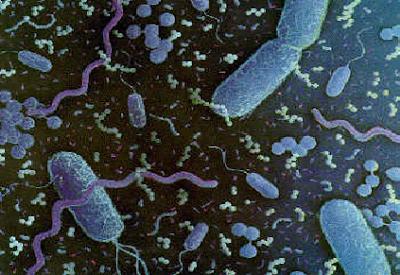 Mikroba Bisa Bertahan Hidup di Luar Angkasa
