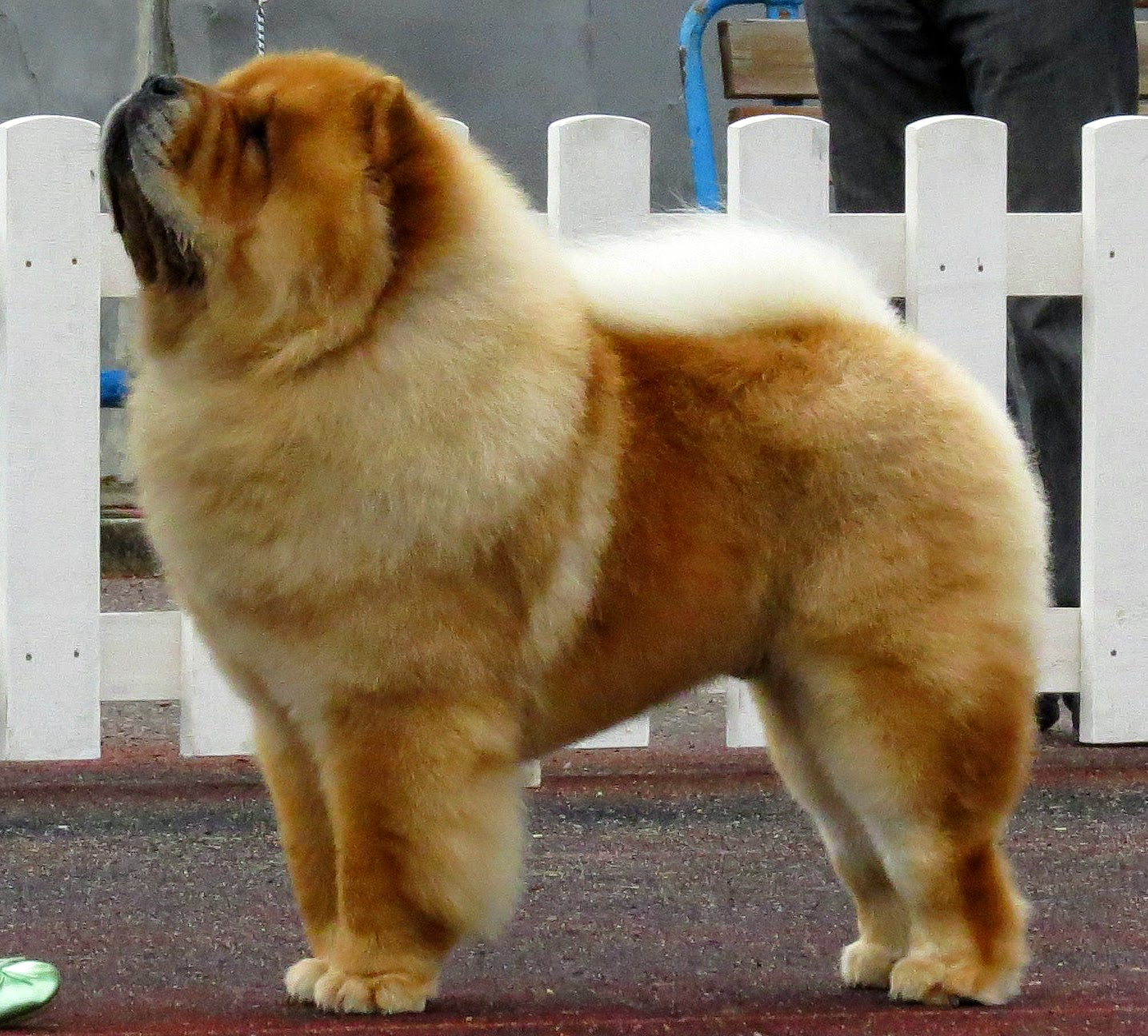 Fluffy Dog Breeds | The Double Coated Dog Breed List - Puff ...