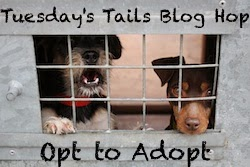 http://dogsnpawz.com/tuesdays-tails-adopt-this-senior-labpittie-mix/#.VGHLVbDu3IU