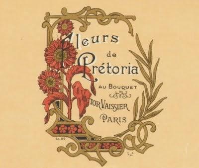 Fleurs de Prétoria