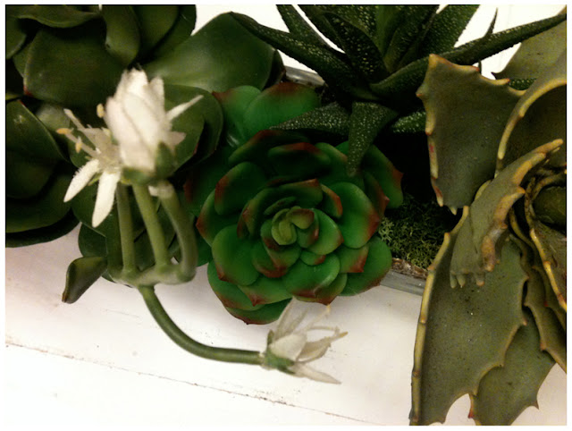 Cactus Mini-Garden - Artificilal Arrangements