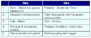 tabel perbedaan dna dan rna,perbedaan dna dan rna pdf,antara,struktur,virus,perbedaan nabi dan rasul,