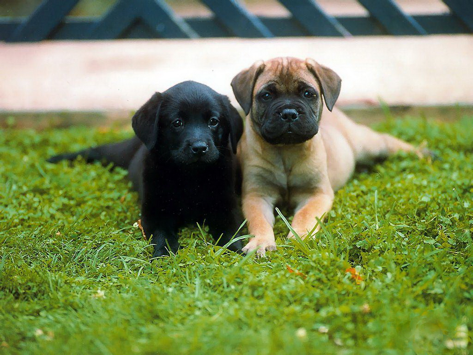 http://4.bp.blogspot.com/-mmw-6woNaJU/Tyw8F-fbboI/AAAAAAAAA18/H-p5B_Fa6l0/s1600/11-Cute+Dog+1600x1200.jpg