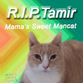 Forever, Tamir