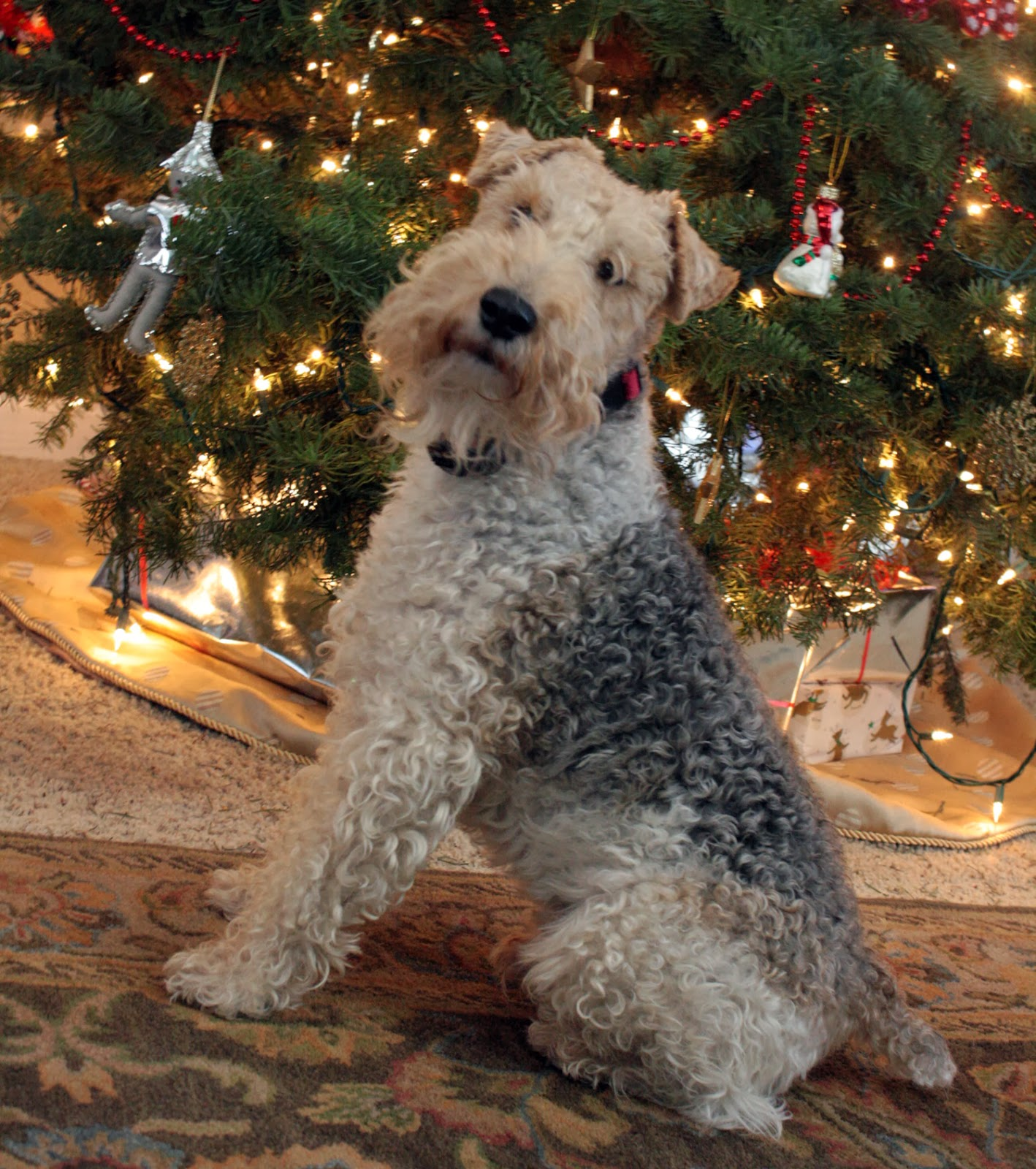 Christmas with Wire Fox Terriers - Presents for the Wire Fox Terrier lover The Tipsy Terrier Blog