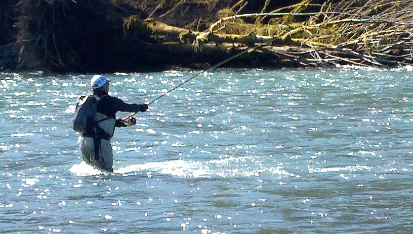 Washington fly fishing winter steelhead and the full wolf for Hoh river fishing