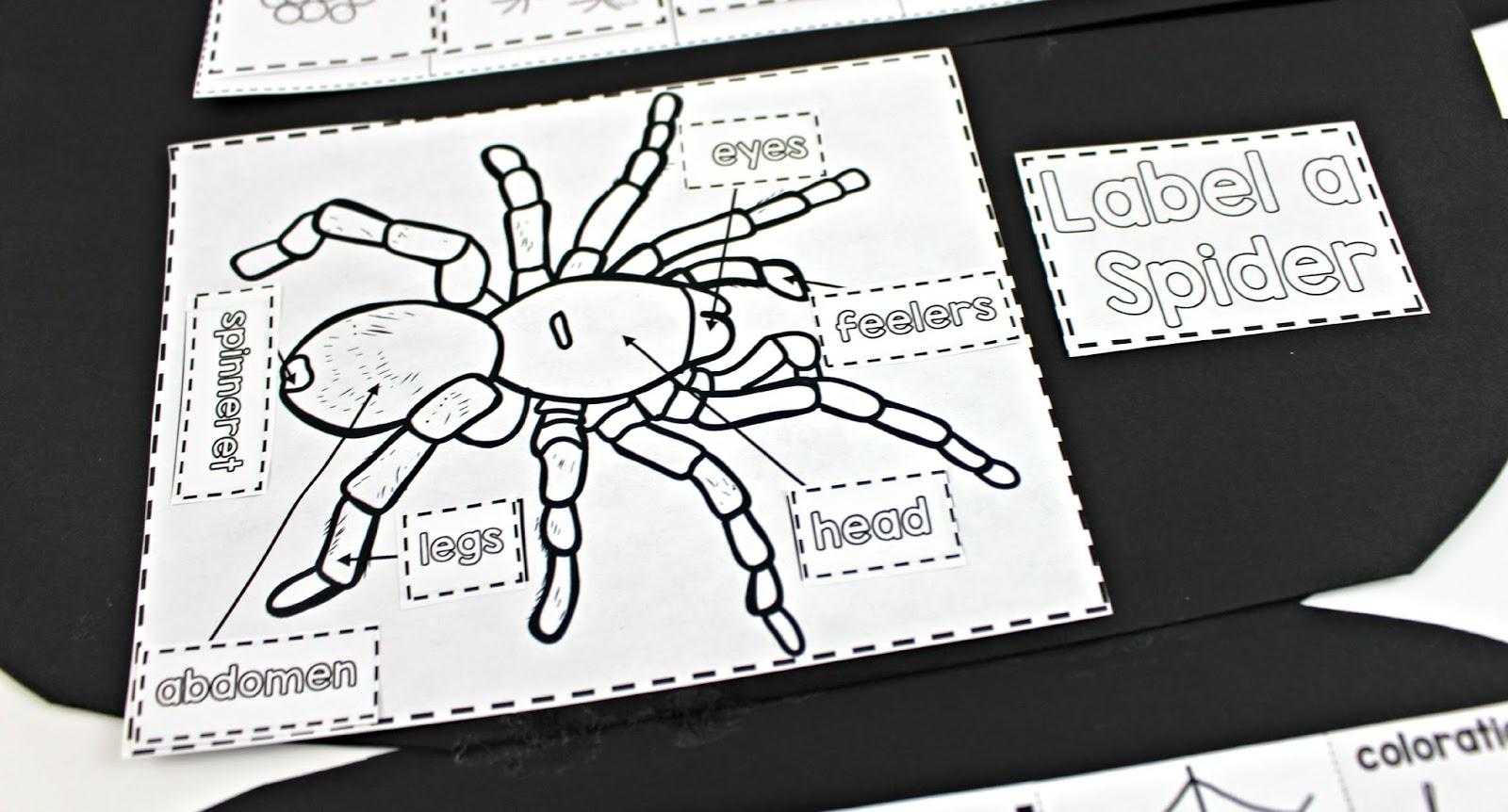 spider science booklet tunstall u0027s teaching tidbits