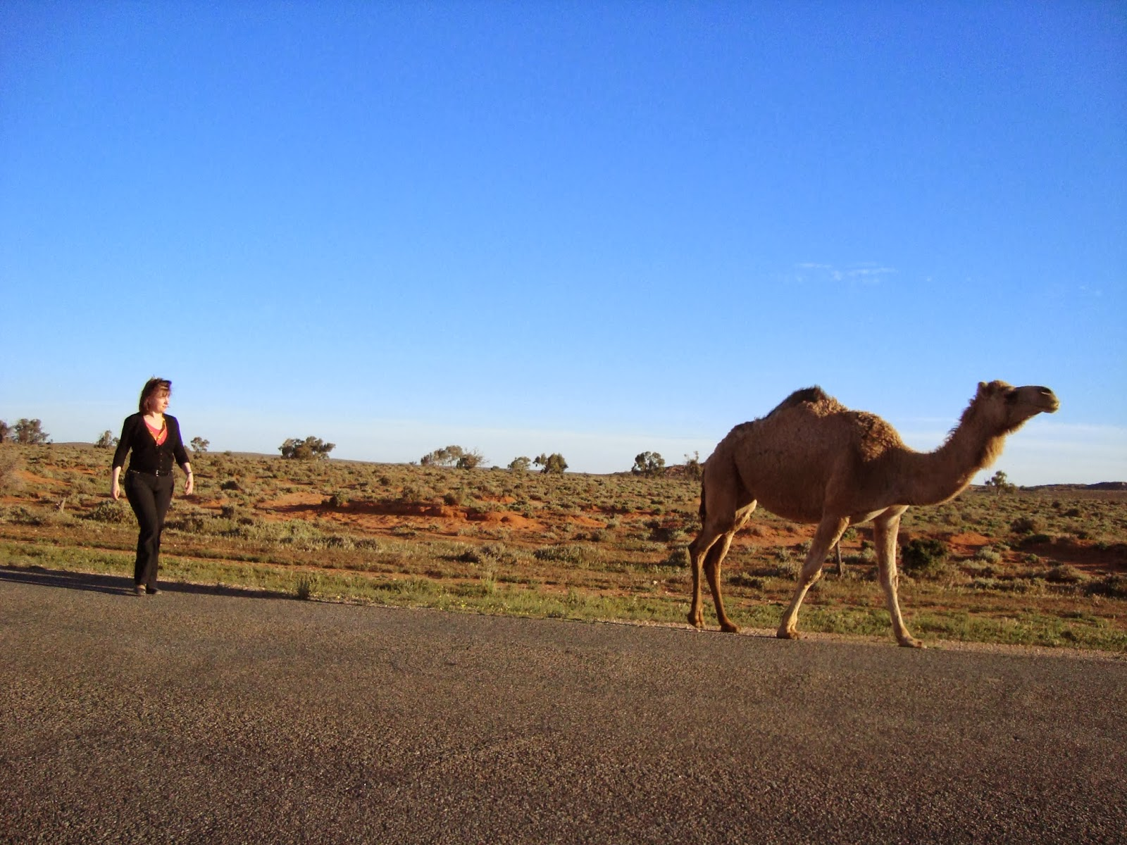 how to go from menindee to broken hill by train