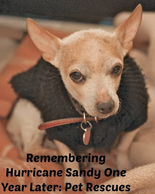 Remembering Hurricane Sandy One Year Later: Pet Rescue Photos