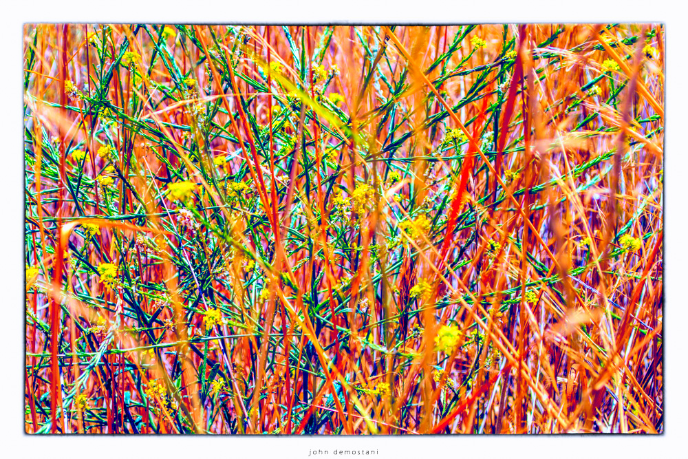 colorful grass and wild flowers, abstract art, nature and landscape photography