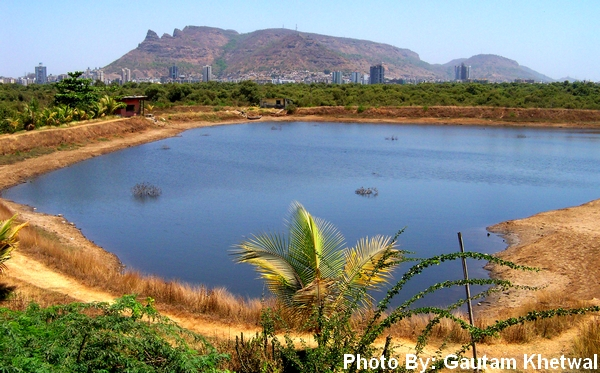 Thane the lake city fishing pond near dadlani park balkum for Ponds to fish in near me