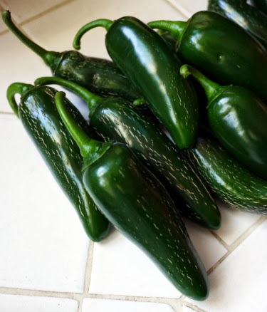 backyard jalapeno harvest