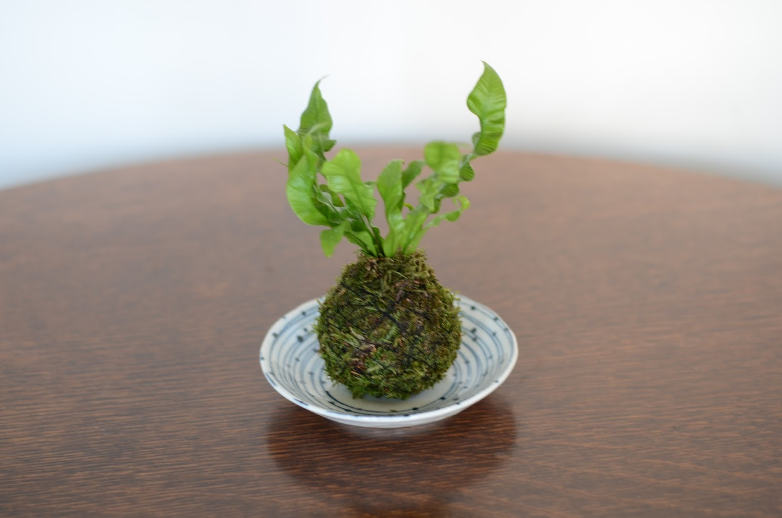 kokedama et petit bonsai kokedama pour ete. Black Bedroom Furniture Sets. Home Design Ideas