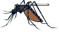 WEST NILE UPDATE